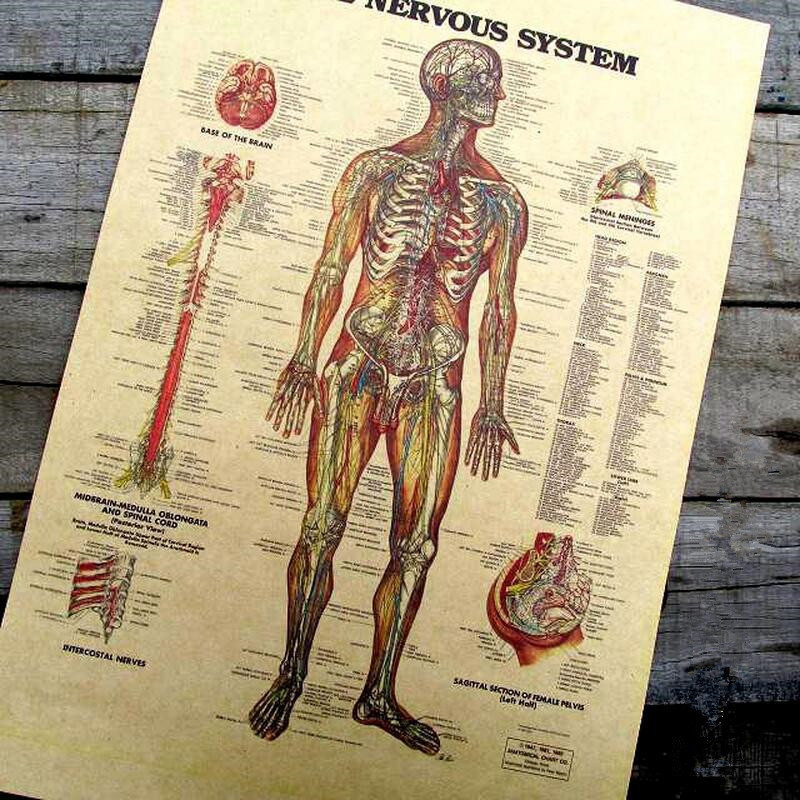 Vintage The Muscles of The Body Structure Nervous System Poster Bar Home Decor Retro Kraft Paper Painting 42x30cm Wall Sticker(China (Mainland))