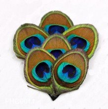 Free Shipping !!! 10pcs/lot, Luxurious Natural Peacock Hairpins Brooch Feather Hair Clips For Events(China (Mainland))