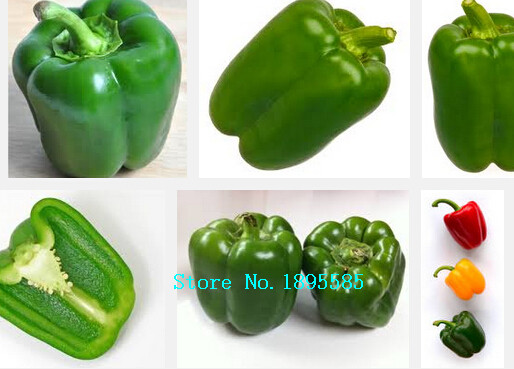pepper seed, vegetable seed pods, easy to grow,pepper fragrance, high nutritional value - 200 seeds/bag(China (Mainland))