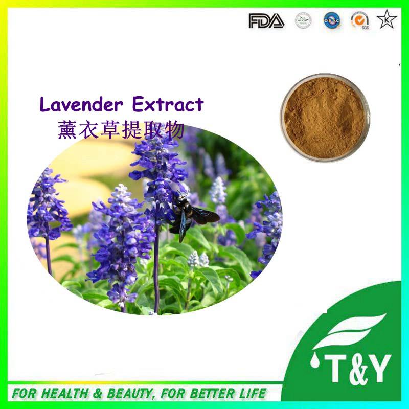 Hot sale! China supplu high quality Lavender Extract/Lavandula flower Extract/Lavandula herb extract 800g/lot