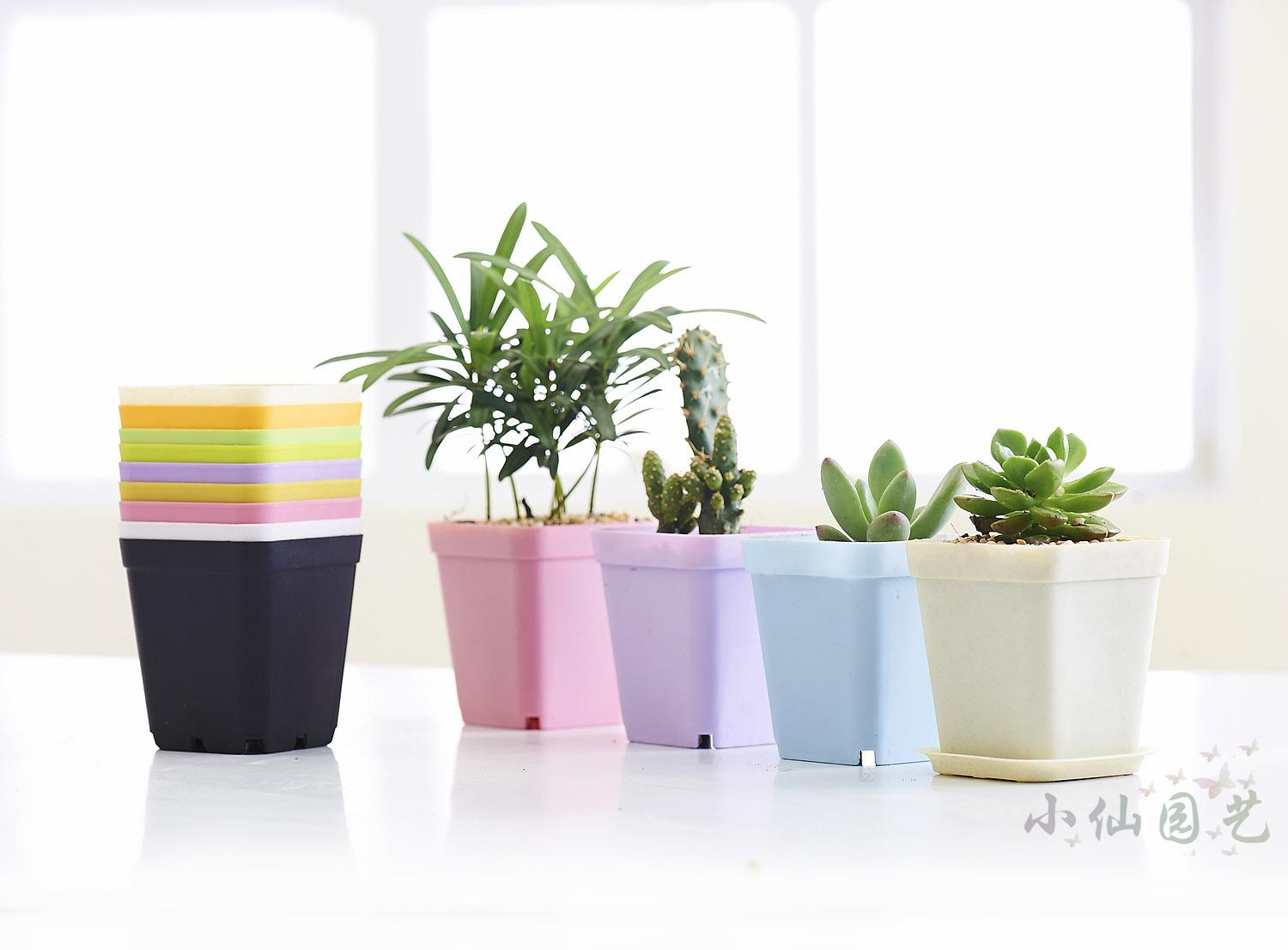 Colorful Thick Fleshy Succulents Flower Pot Nursery Small