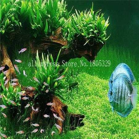 Plants fish tank aquarium decoration grass seed plants seeds 200seeds/bag(China (Mainland))