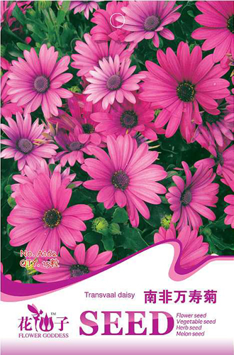 15 Transvaal Daisy Flower Seeds Home Garden Supplies Bloom exotic Real Seeds Free Shipping A162(China (Mainland))