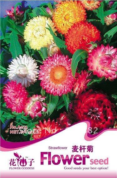 купить Карликовое дерево FLOWER GODDESS 3 * 50 A018 недорого