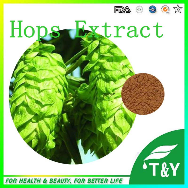 Long time supply herbal extract hops powder<br><br>Aliexpress