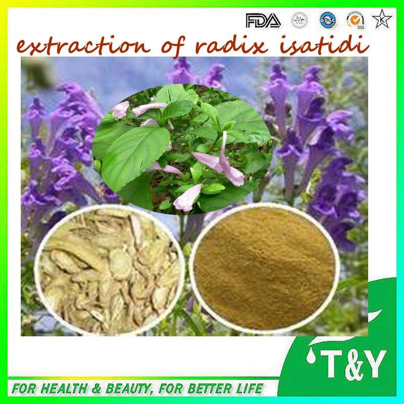 High quality Radix Isatidis extract./Isatis tinctoria extract / Indigowoad Root extract 10:1