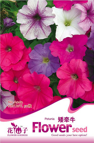 Buy 2 Get 1!(Can accumulate ) 1 Pack 100 Seeds Low Petunia flower Color mixing A062(China (Mainland))