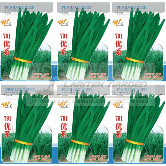 5 Original Packs, 15g / Pack, 791 Series Chinese Chives Seeds, Organic Green Allium Tuberosum - Laritek Garden Store store