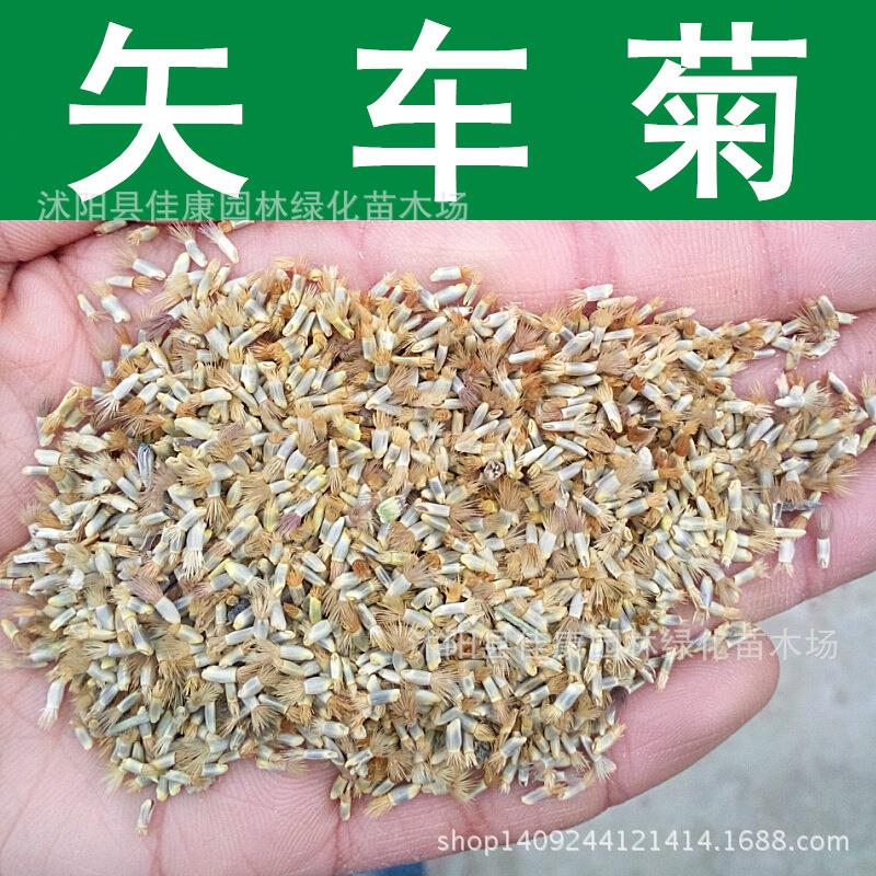 flower seed cornflower blue hibiscus lychee seed daisy grass seed can be broadcast four seasons genuine security 200g / Pack(China (Mainland))