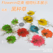 Love-in-a-mist flower embossed dried flowers diy  natural bountyless branches handmade plastic(China (Mainland))