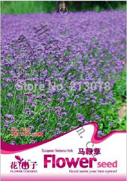 Special sales of flower seeds european verbena herb, herbal verbena seeds, potted Verbena officinalis,about 50 particles/pack(China (Mainland))