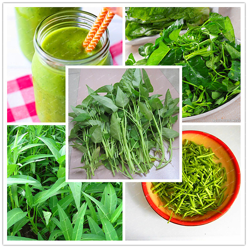 1 original package 200 PCS/ag Big leaf delicious seeds,Water spinach seed Rich Nutrition green vegetables heat-resisting(China (Mainland))