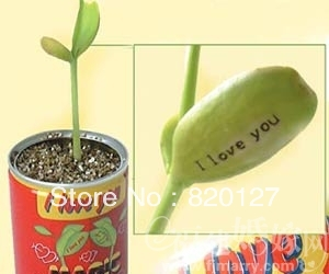 Карликовое дерево Happy 30  no карликовое дерево china seeds dionaea muscipula