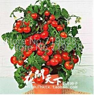 Bonsai Tomato seeds Mini Cherry Potted Sweet Fruit Vegetable Organic Fresh 20 seeds/pack(China (Mainland))