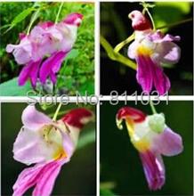 20 шт. китай редкий попугай цветок орхидеи семена в мире редкие высококачественный бонсай садовые дома семена Semillas Loro sementes-де-флорес бесплатная доставка(China (Mainland))