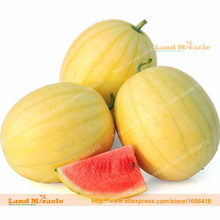 Buy Faerie Organic Watermelon Seeds, 10 Seeds/Pack, Annual Fruit Seeds Yellow Skin Citrullus Lanatus Crisp and Extra-sweet. for $1.36 in AliExpress store