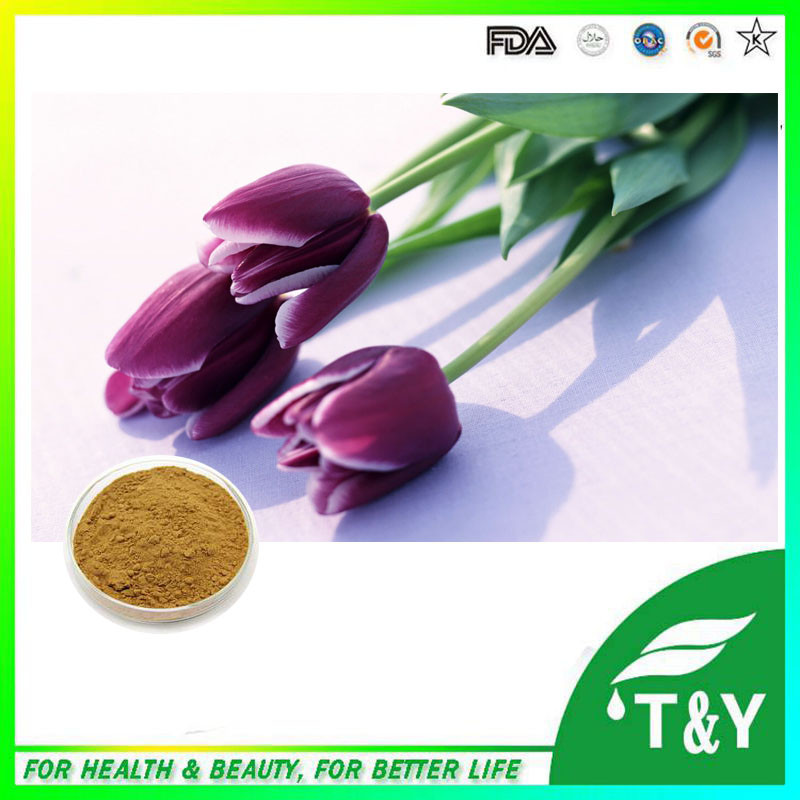 Top quality hot-sale high quality natural plant tulip extract powder 700g/lot