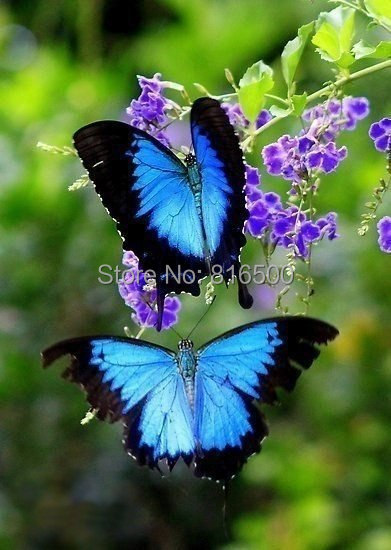 New Arrival Embroidery Russia Flowers Butterly DIY Diamond Paintings Full Mosaic 20X30CM Picture Pattern Cross Stitch Rhinestone(China (Mainland))