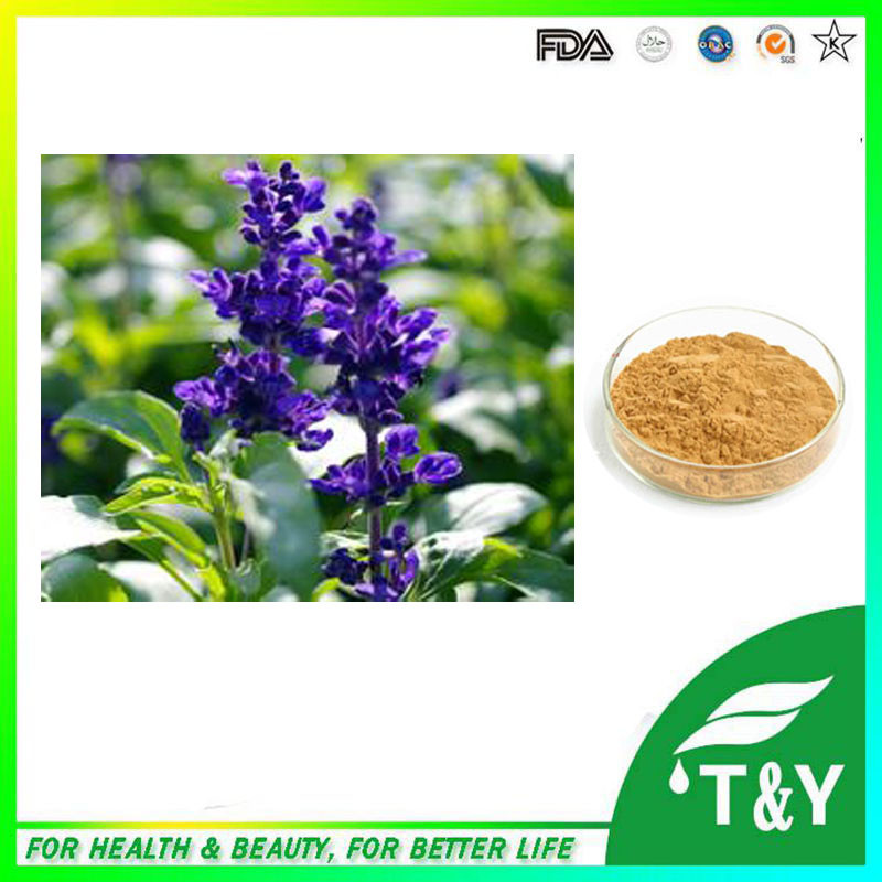 Supply natural Certification salvia extract / Sage Leaf Extract Powder 300G/LOT