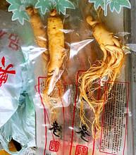 Ginseng Root 5pcs/150g Top Grade Vacuum Pack Big Panax Fresh Ginseng Root 8 Years Old Wholesales Herbal tea