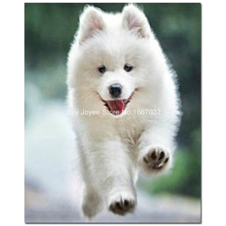Petit chien blanc mignon chiot diamant broderie animaux peinture diamants ple - Peinture petit blanc ...