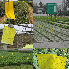25x15cm Double sided Sticky Flying Insects Thrips Gnats Aphid Fruitfly Trap Yellow(China (Mainland))