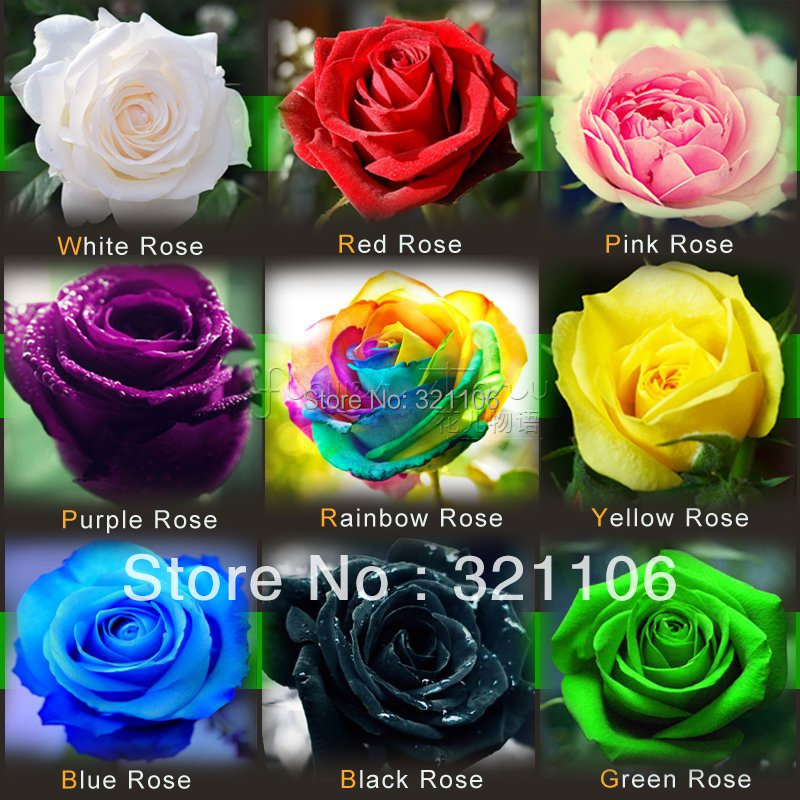 1080 Rose Seeds 9 Packs Each Color 120 Seeds -DIY Home Gardening Pot Balcony & Yard  Fragrant Flower Plant Bonsai Decoration(China (Mainland))