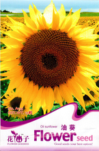 15 Seeds Oil sunflower Helianthus annuus Linn. Flowers Scented home A135 Free shipping(China (Mainland))