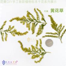 Yellow grass diy handmade dried flowers plant flower natural bouquet herbal glue(China (Mainland))