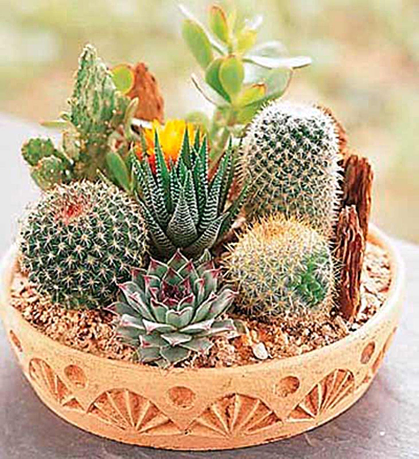 2016 new 60 piece Cactus Seeds Mix Organic Ornamental Seed unusual succulents, can purify the air and prevent radiation(China (Mainland))