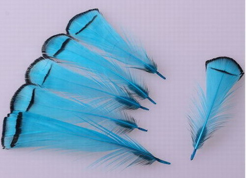 Free Shipping 50pcs unique natural Sky Blue pheasant feather 5-8 cm /2-4 incheFor Christmas, wedding decoration, DIY(China (Mainland))