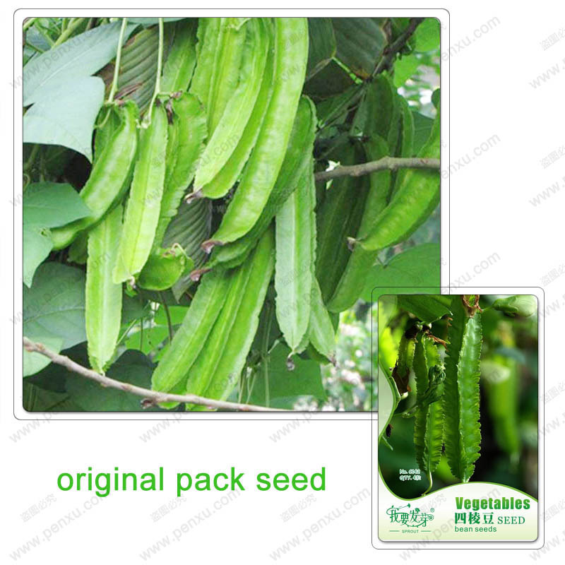 Original Pack 4 Seeds / Pack,Psophocarpus seeds,Winged,Potted flowers balcony , garden plant seeds vegetables(China (Mainland))