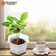 A Pack 20 Pcs Coffee Bean Seeds Balcony Bonsai Tree Plant Seed Coffee Cherry Seeds(China (Mainland))