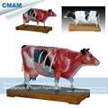 CMAM A08 Cattle Acupuncture Anatomical Model Animal Acupuncture Models