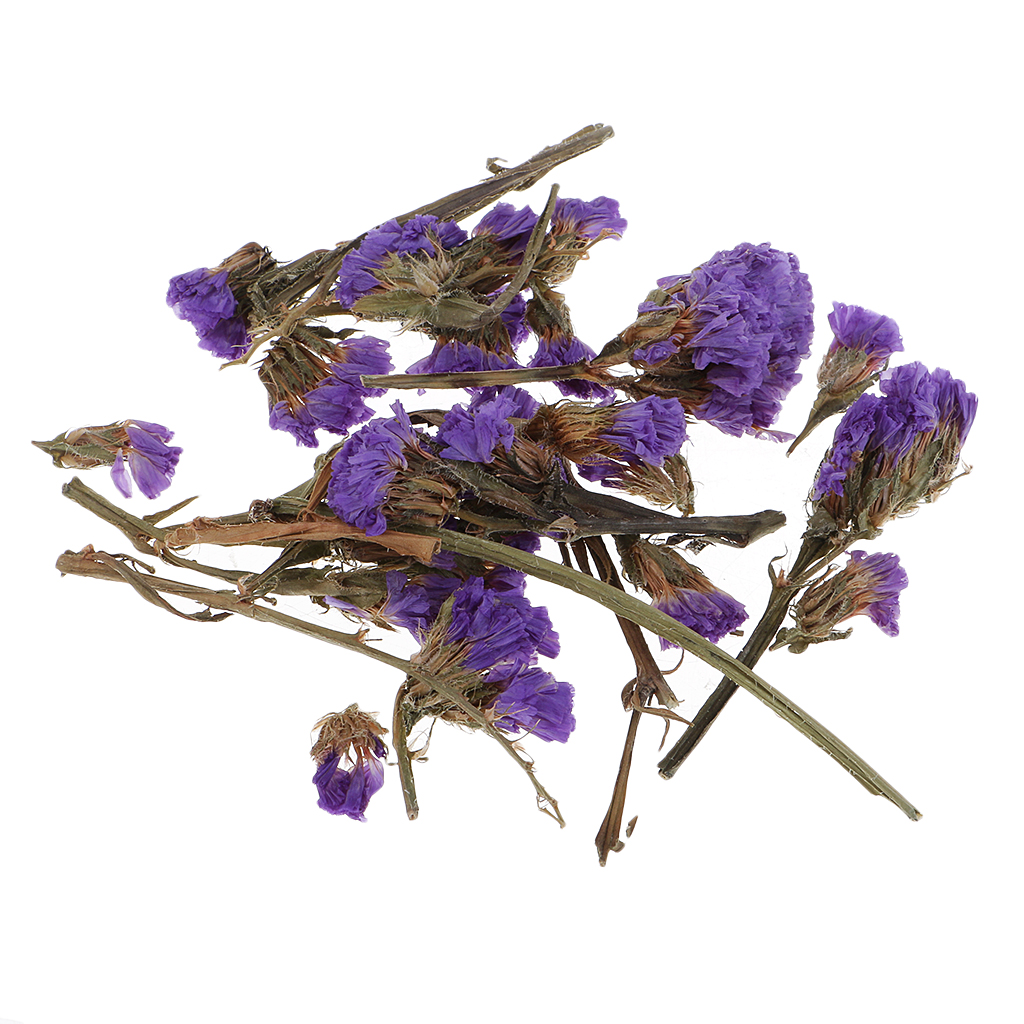 4g Natural Real Flower Dried Flowers Embellishment for DIY Craft Scrapbook