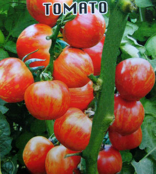Smile Babe color tomato seeds 100 pcs hot organic vegetable seeds (buy 3 pack of this kind get extra 1pack for free)(China (Mainland))