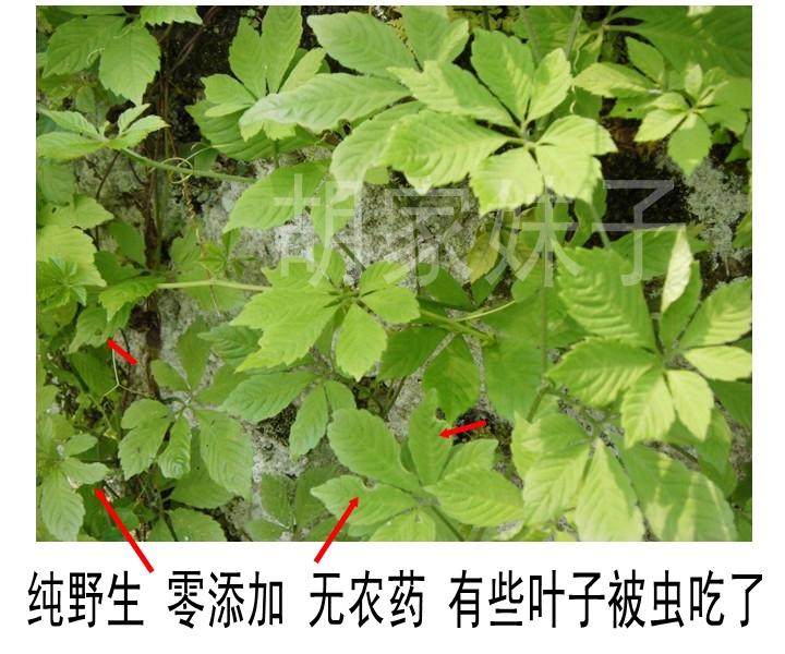 Authentic Gynostemma Pentaphyllum Herbal Tea 500g Jiaogulan Natural Wild Gynostemma Seven Leaves Herbal Tea Free Shipping