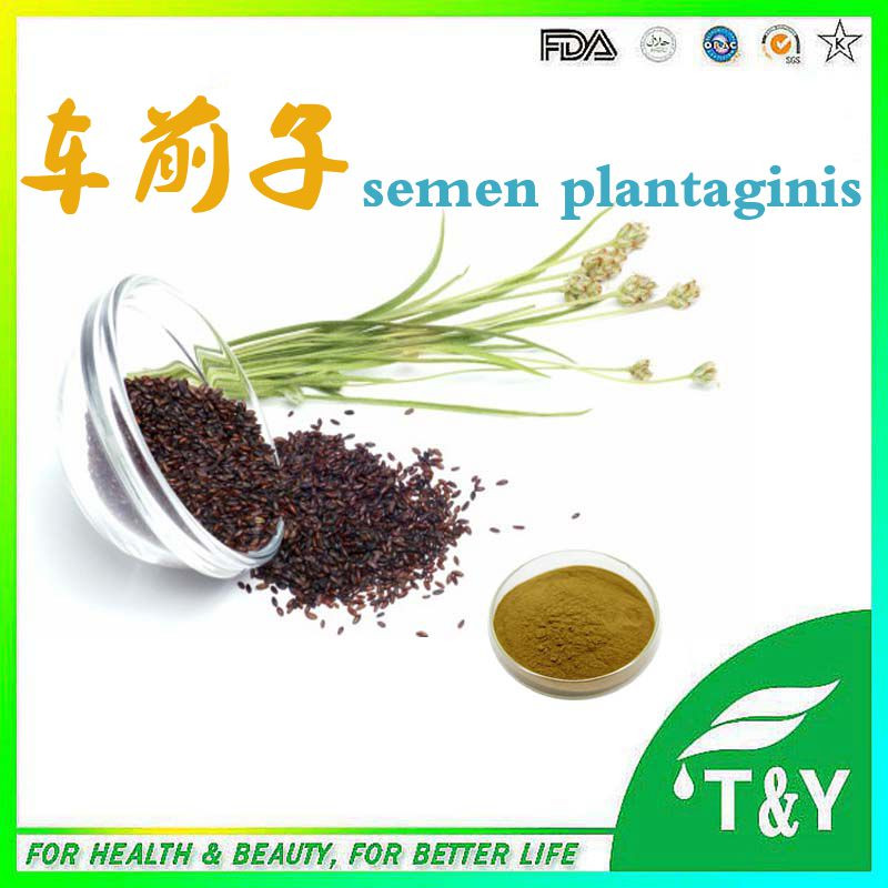 Supply 100% Pure and Organic Semen Plantaginis Extract from China<br><br>Aliexpress
