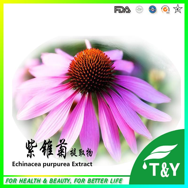 Echinacea Purpurea Extract In Bulk , Echinacea Extract Powder  <br><br>Aliexpress