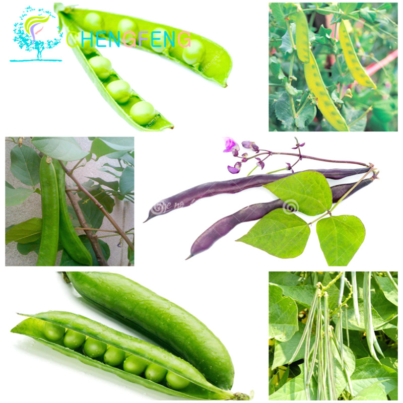 10 Asparagus Sweet Pea Seed Sweet Vegetable Type Of Home Gardens Both Raw And Cooked Pod Bean Class Can Eat Free Shipping(China (Mainland))