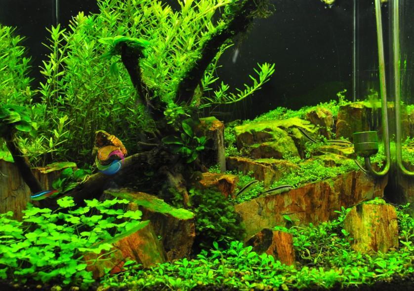 Gold aquarium petrified wood decorative design for Landscaping rocks for aquarium