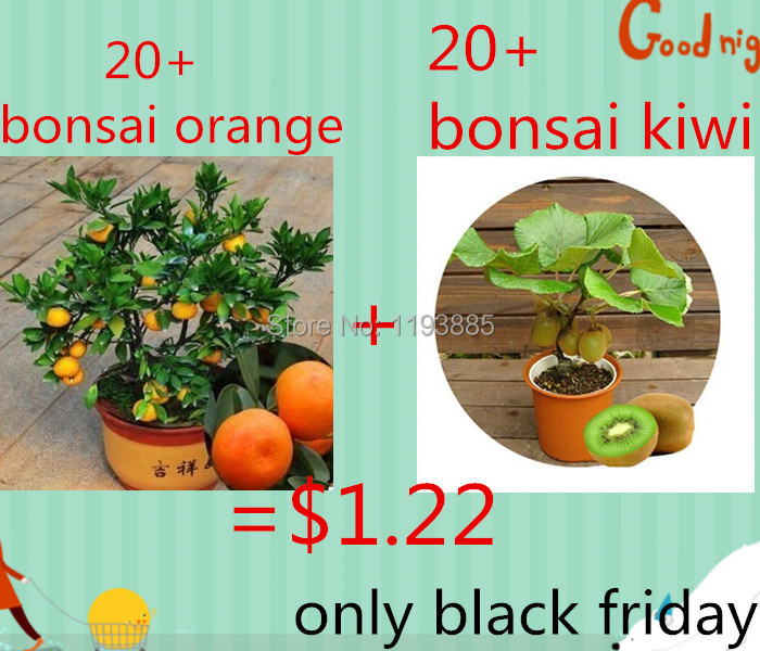 product $1.22 get 20 Thailand Mini Kiwi Fruit seeds and 20 gold orange  seeds  seeds  for  black friday as gift