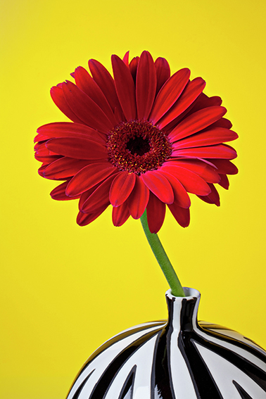 Modern wall art <font><b>home</b></font> <font><b>decoration</b></font> printed oil painting canvas prints no frame JW623 <font><b>italian</b></font> oil paintings a cute red daisy in vase