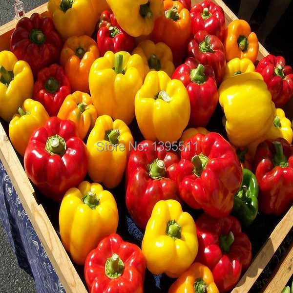 100 rainbow sweet pepper Seeds send 200 rainbow carrot seeds as gift vegetable Seeds For Home