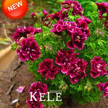 Sale!20 PCS/Pack Crimson Flower Petals Geranium Seeds, Perennial Flower Seeds Pelargonium Peltatum Flowers,#WM9T73(China (Mainland))