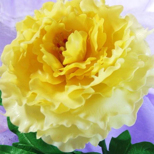 10pc Yellow Peony Seeds The Most Beautiful And Fragrant