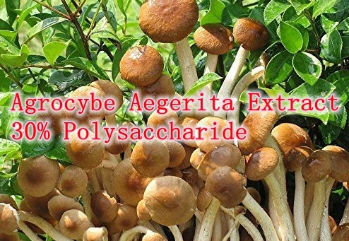 Здесь можно купить  500gram Agrocybe Aegerita (Tea tree mushroom) Extract 30% Polysaccharide powerful Anti-aging, anti-oxidant 100% water soluble  Красота и здоровье