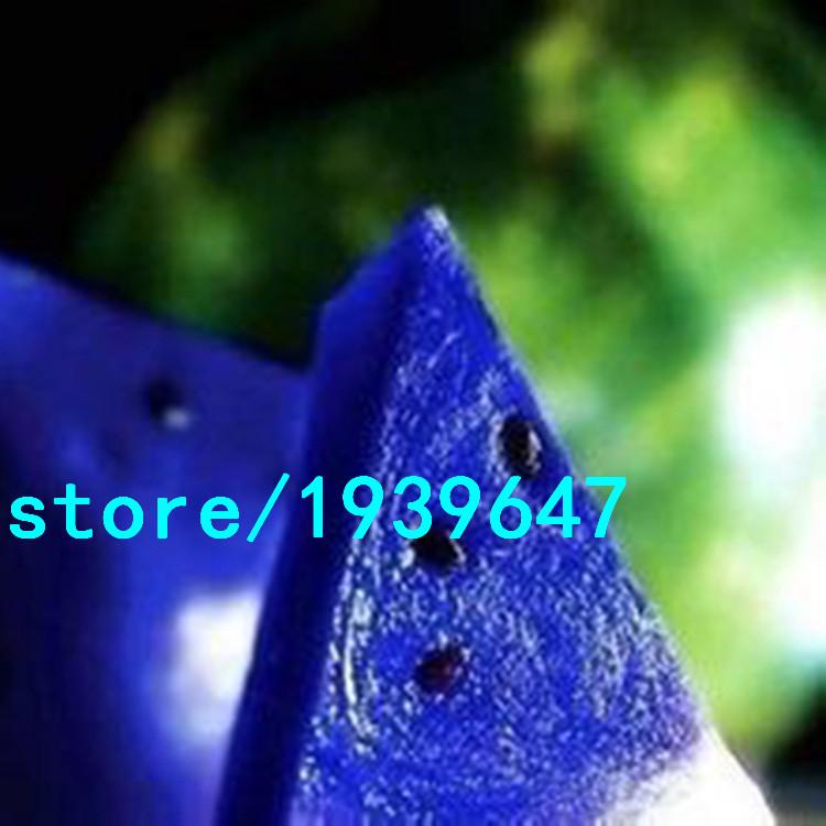 Rare Blue Flesh Watermelon Seeds 50PCS New Varieties of Water Melon Bonsai Plants Seeds NON-GMO Organic Edible Fruits(China (Mainland))
