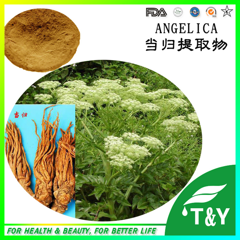 Chinese Angelica Extrat/ Dong-Quai/ Angelica Extract 300g/lot<br><br>Aliexpress