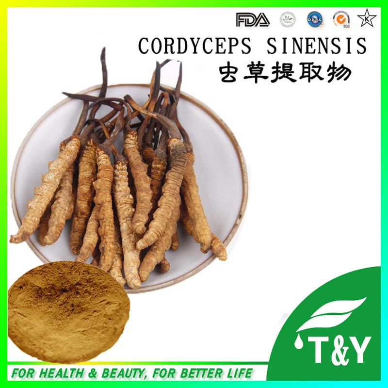 Hot Sale Cordyceps Sinensis Extract 500g<br><br>Aliexpress